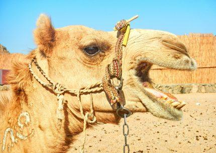 14 NIGHTS -15 DAYS Around Egypt